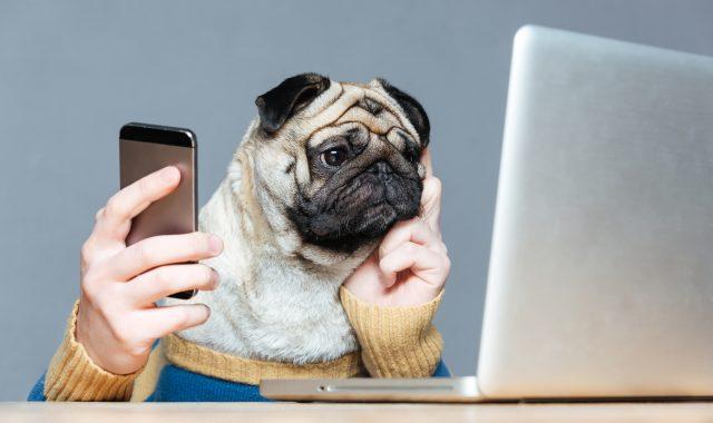 Hund mit Smartphone & Laptop mit optimalem Mobile Abo für KMU